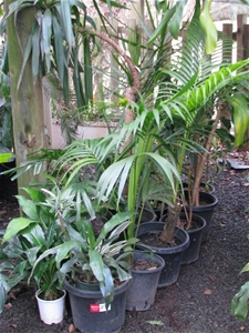 10 x assorted indoor shade loving potted plants in various size pots and he auction 0274 - Indoor plants for shade ...