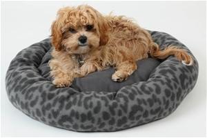 4Paws Round Pet Bed - 55cm (DIA)