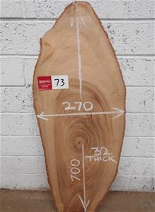 Oval Slice - Camphor Laurel
