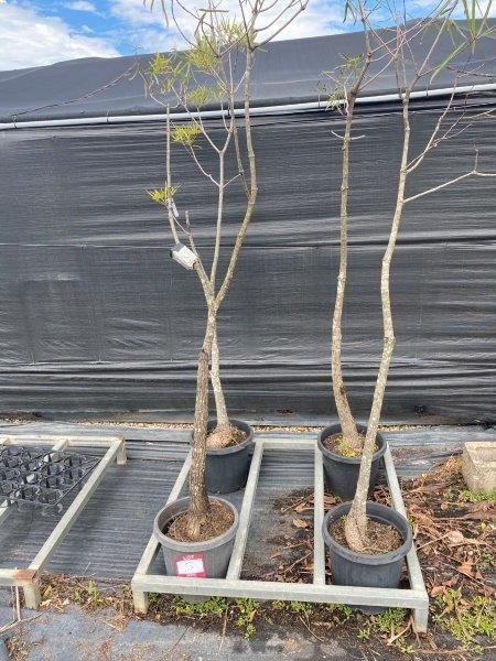 4 x Bottle Trees