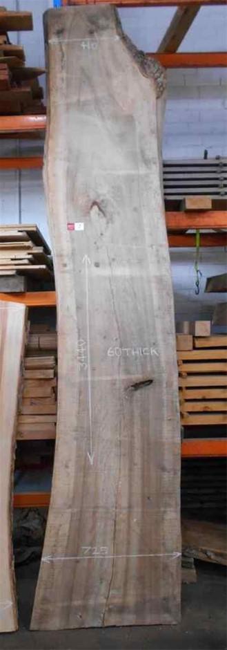 Large Timber Slab - Camphor Laurel