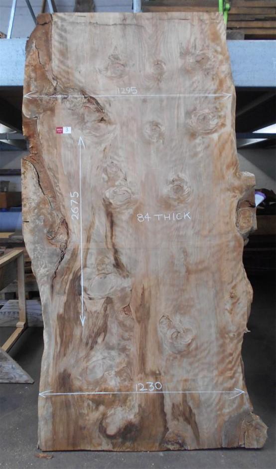 Large Timber Slab - Bunya Pine