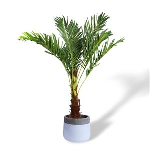 Jumbo 180cm Faux Artificial Phoenix Palm